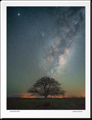 [Print] The Lone Tree