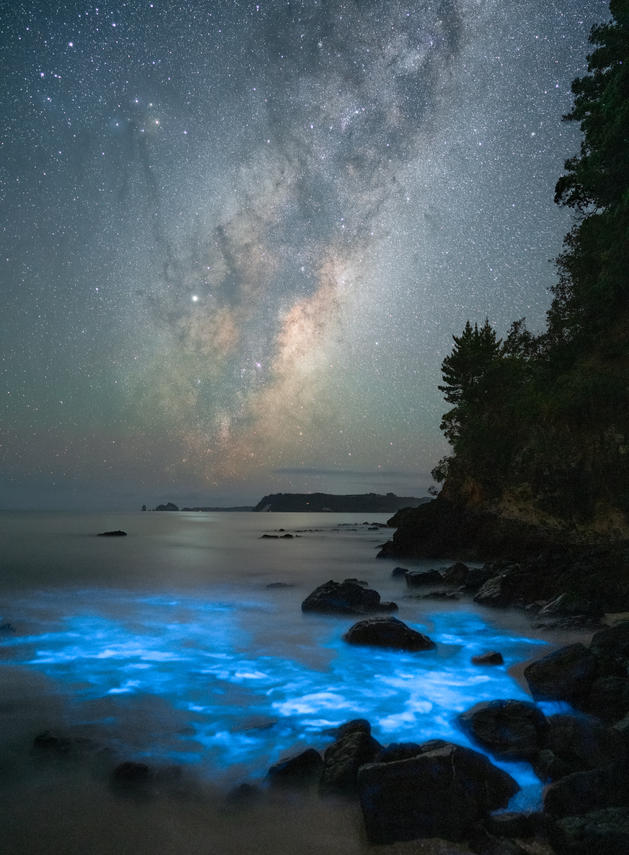 Exaggerated Bioluminescence
