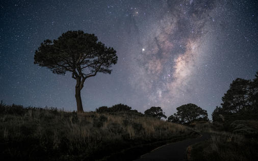 Memorial Tree Milky Way