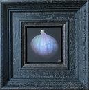 dani humberstone fig.jpg