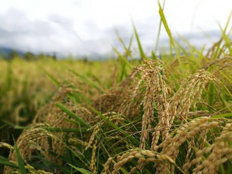 2017.4月:今年はお米もがんばります
