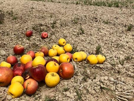 2018.4月:信州りんごの循環米