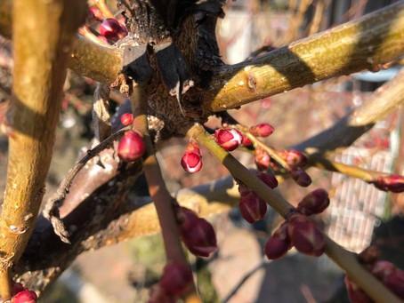 2018.3月:芽吹きの季節が近づいてきました!