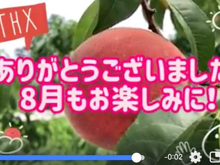 7月の桃から8月の桃へ