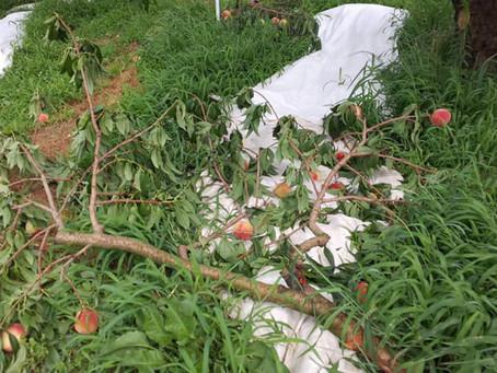 台風10 号の被害について