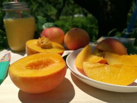 【農家の豆知識】白桃と黄桃の味覚の違い