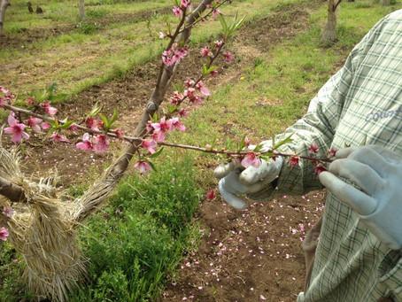 2017.4月:4月の花摘み