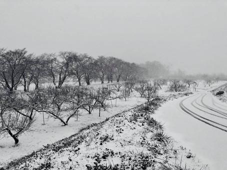 2018.1月:ドカ雪がふってきた!