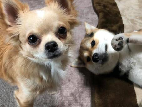 2018.2月:アイドル犬がもう1匹!