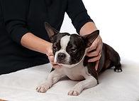 dog-massage-website.jpg