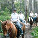 160sq-Horses.png
