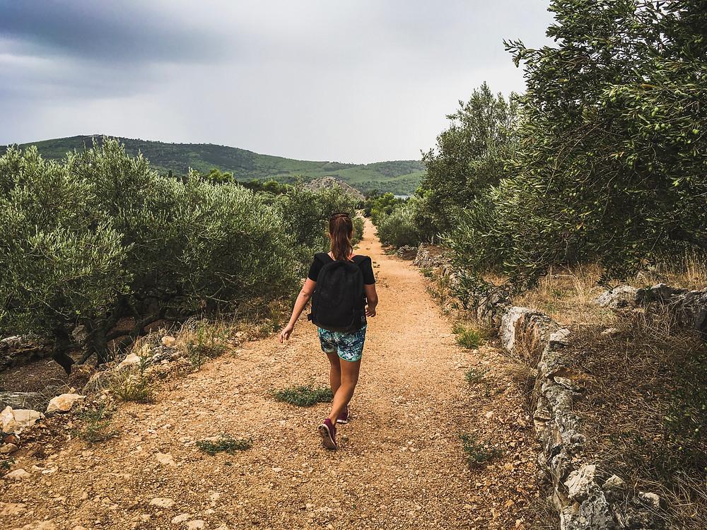 Beautiful olive grove trail in Dugi Otok