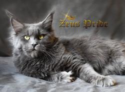 Aurora Blue Ridge of Zeus Pride