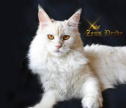 Adelantado Fabia Venus of Zeus Pride