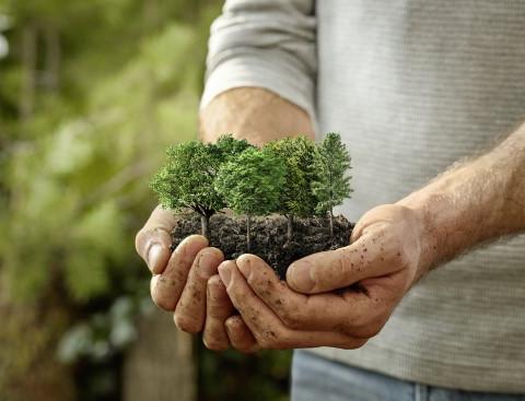 Pflanzt Bäume! 7 Baum-Projekte, die ihr unterstützen könnt.