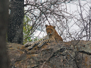 South Africa Diaries: Day 8