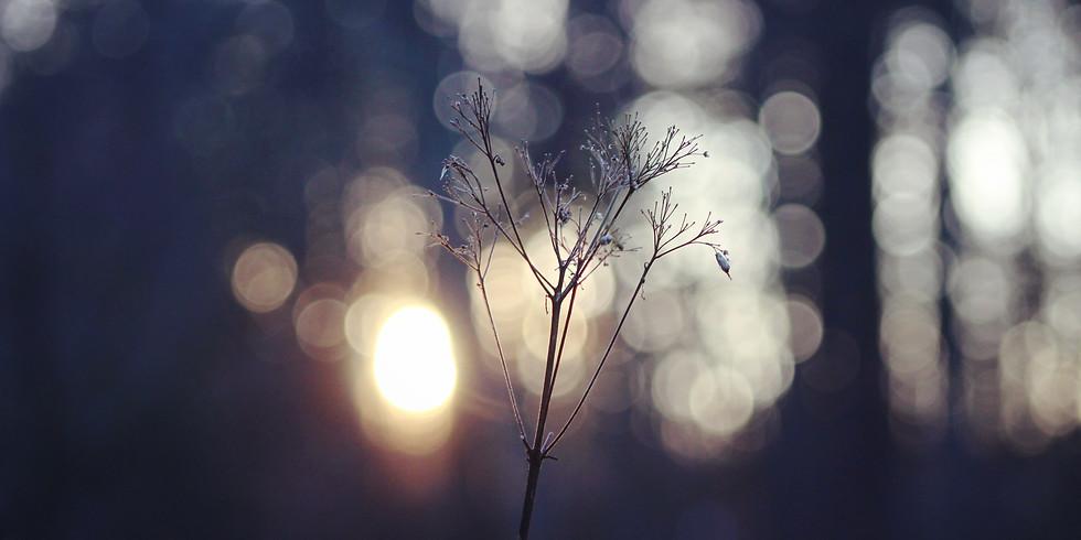 *Catch the Light*