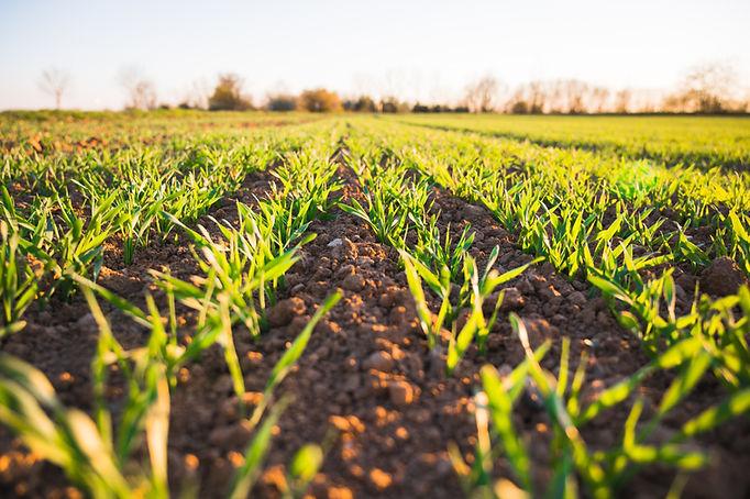 Regenerative soil storing carbon | Rize ag
