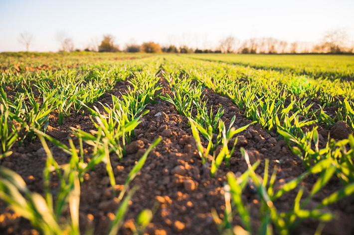 Regenerative field storing carbon | Rize ag