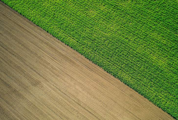 Fields storing carbon | Rize ag