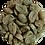 Thumbnail: Nicaragua Maragogype 100g