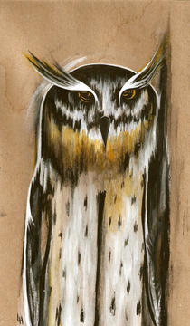 Candyhorned Owl
