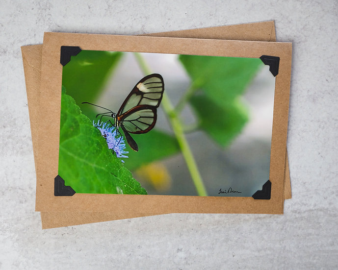 Glass Winged Butterfly Green