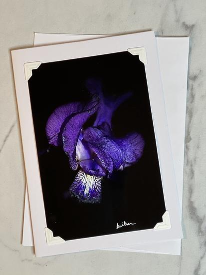 Greeting card - purple flower/black background