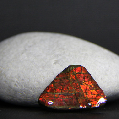 Ammolite Gemstone #6