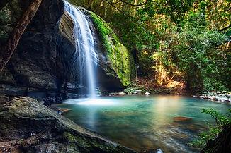 Serenity Falls at Buderim Rainforest Par