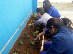 Huerta Ecológica en CEMIN
