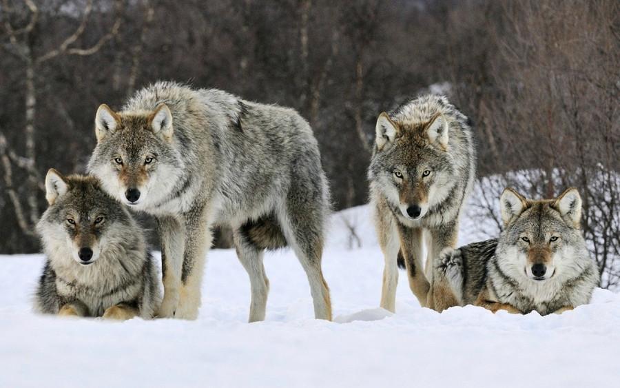 Hunt in Packs
