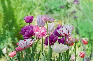 flower-bulbs.jpg