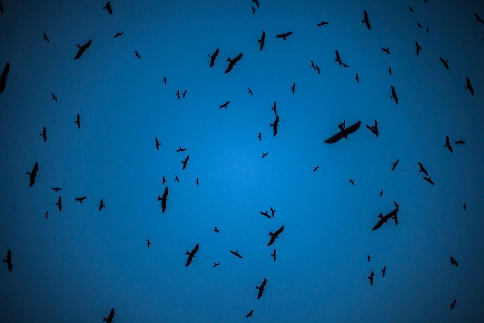 Bird Sky_MM.jpg