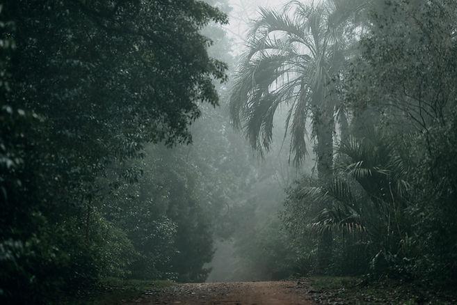 Rainforest_TK.jpg