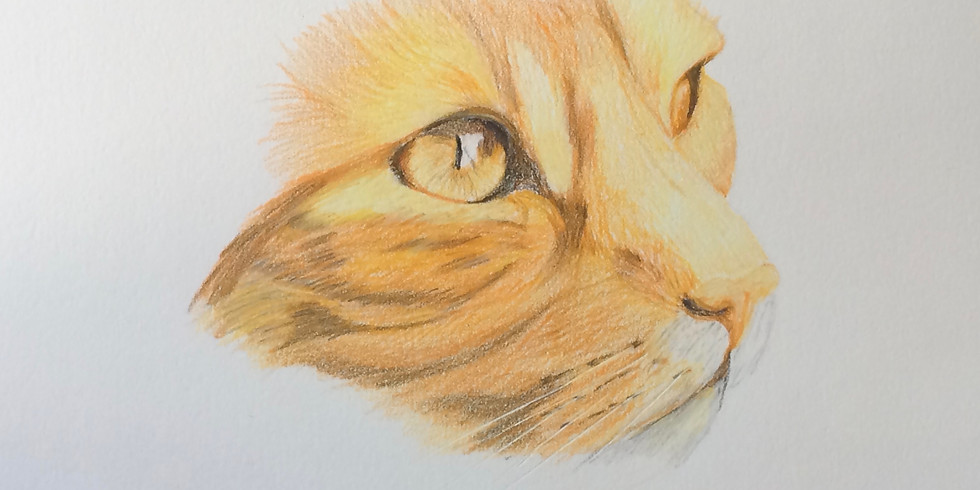 Drawing Basics - Coloured Pencil Edition with Margaret Trapnell (Marmalade)
