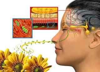 Aromaterapia: emoções e energias com o poder dos aromas