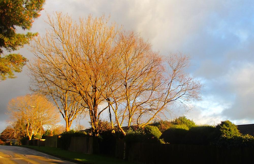 trees, Cornwall