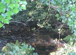 Tehidy-stream-crop.jpg