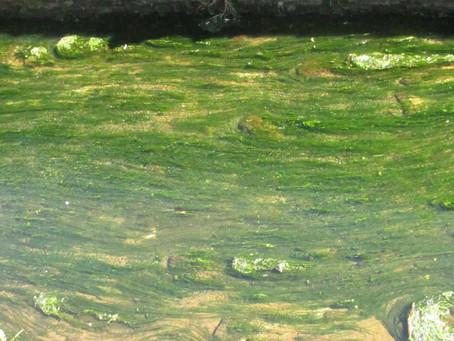 Hidden waterways, showing the way