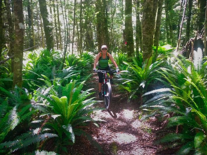 Rangatau Forest