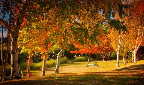 Ohakune Autumn lockdown.jpeg