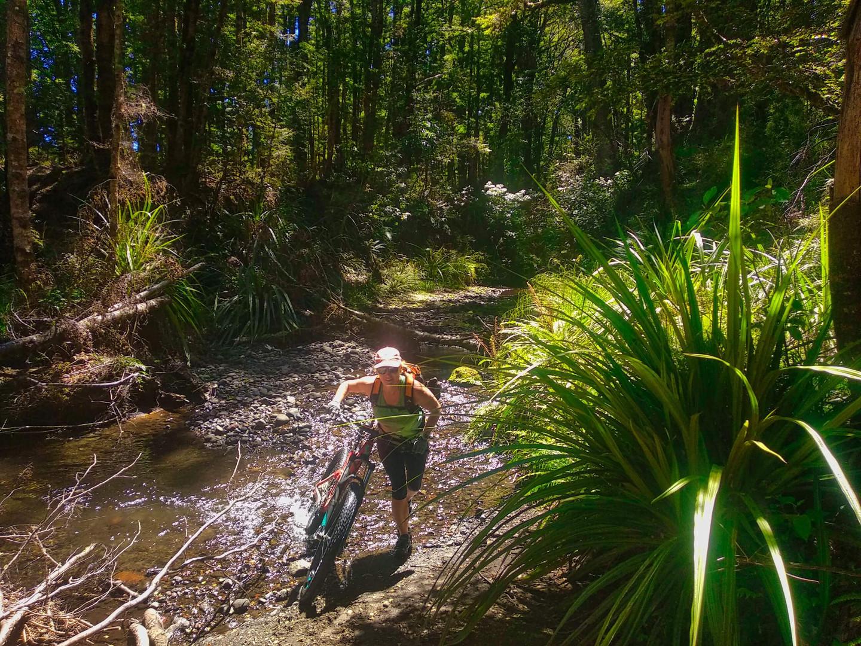 Rangataua Forest