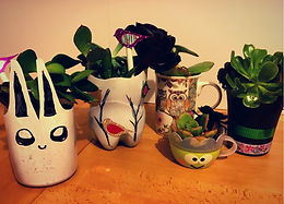 Songbirds + Succulents