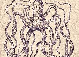Printing: Aquatic Animalia on Tees