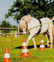 fjalli islandpferd doppellonge pony.jpg