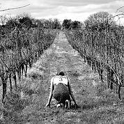 LES ENVIES D'EVE vin biologique carole metzger laurent feuz 34720 caux