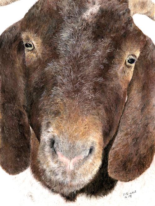 Goat (SOLD)