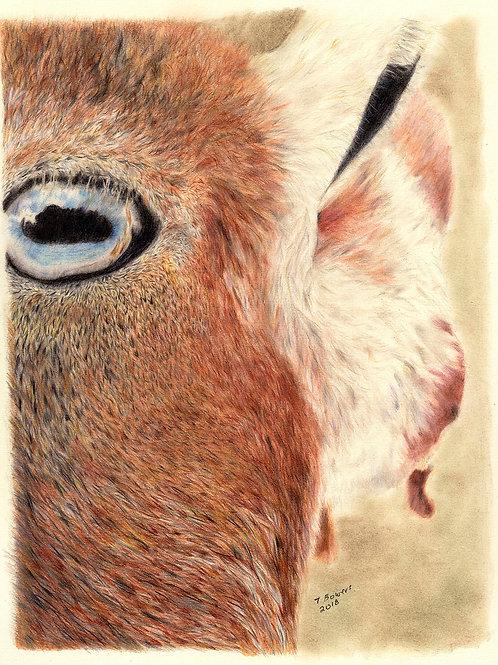 """Goat Selfie"" - Original Unframed"