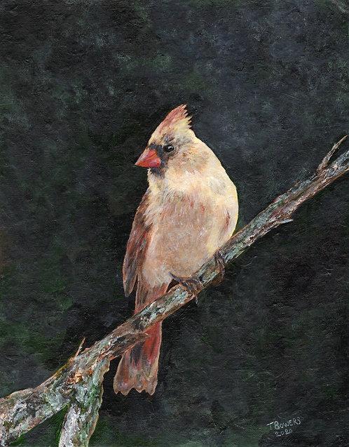 Female Cardinal 11x14